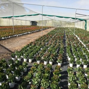 Forest Blooms Nursery – Quality from the Ground Up